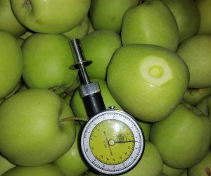Jabłka aagro.pl